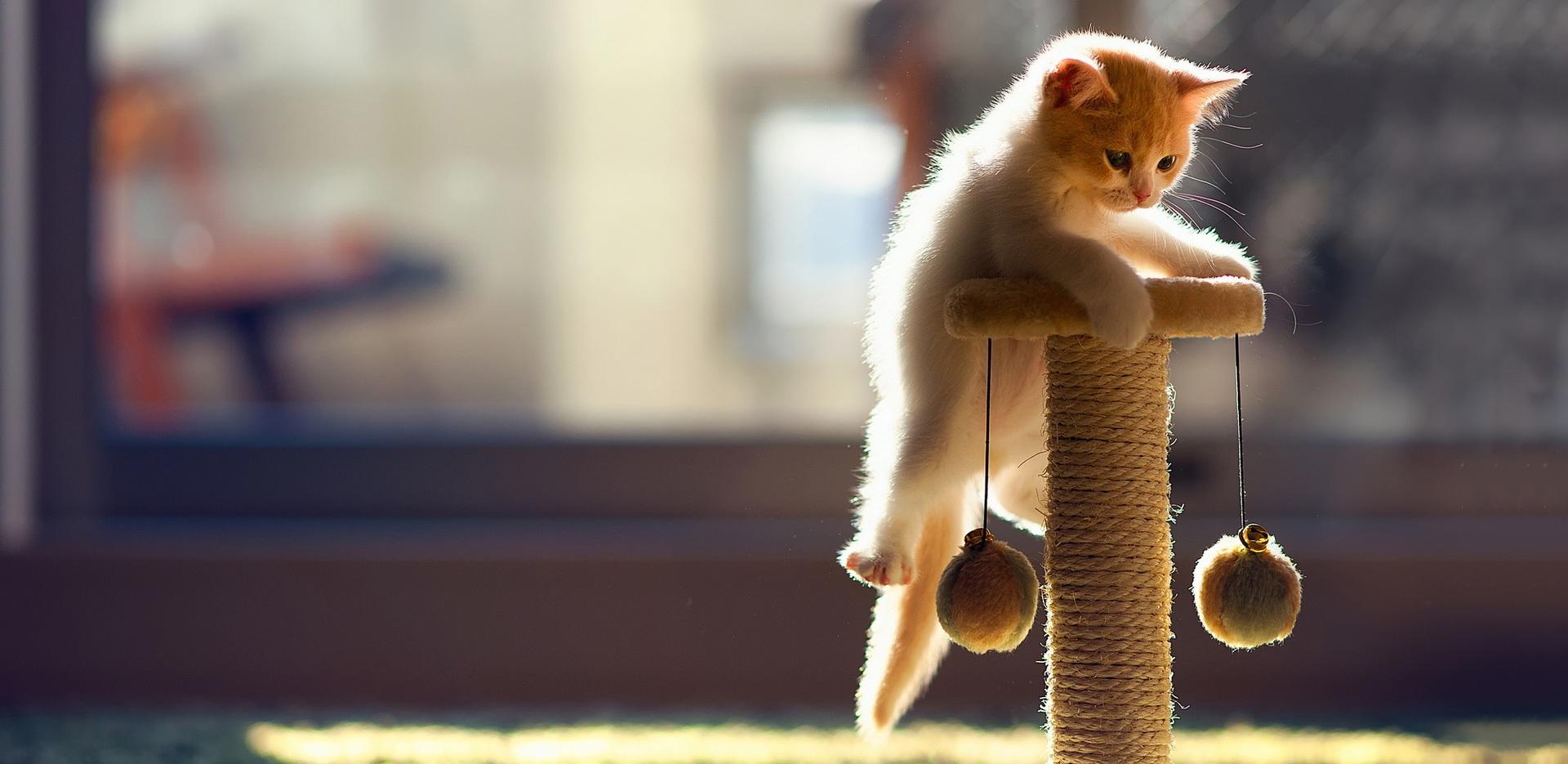 Kat speelt